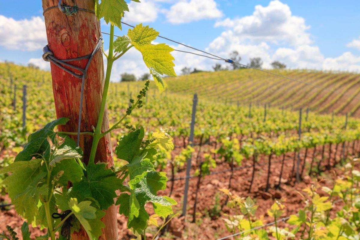 Vinhos Franco