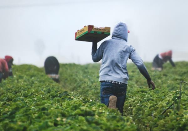 banner-crise-na-agricultura