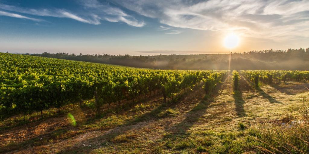 regioes vitivinicolas portuguesas